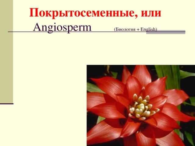 Покрытосеменные, или Angiosperm  ( Биология + English)