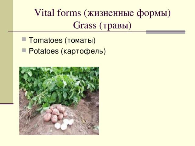 Vital forms ( жизненные формы)  Grass ( травы )