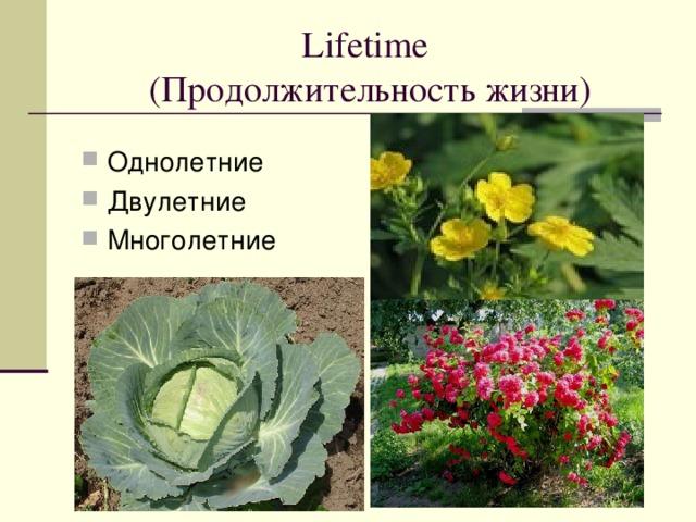 Lifetime  ( Продолжительность жизни )