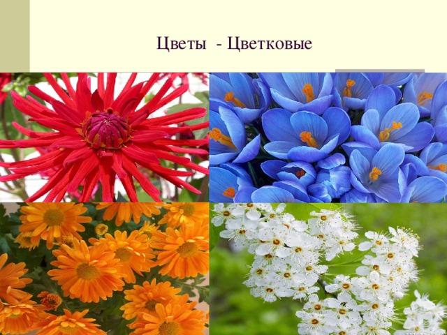 Цветы - Цветковые