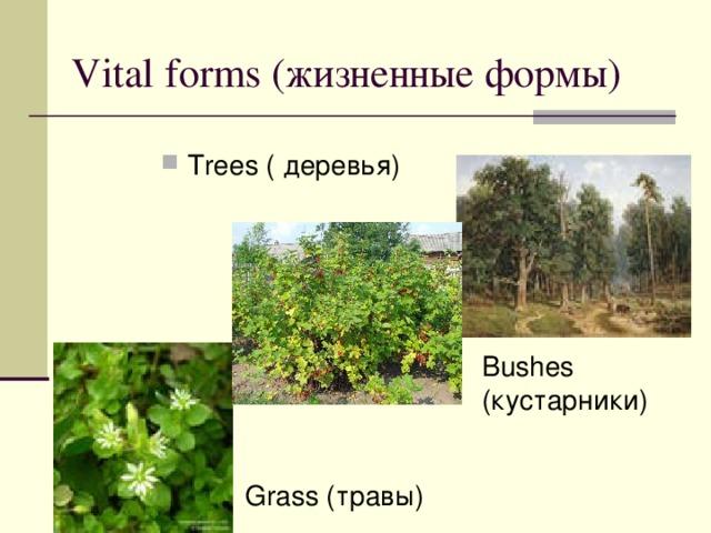 Vital forms ( жизненные формы) Trees ( деревья)    Bushes ( кустарники ) Grass ( травы )