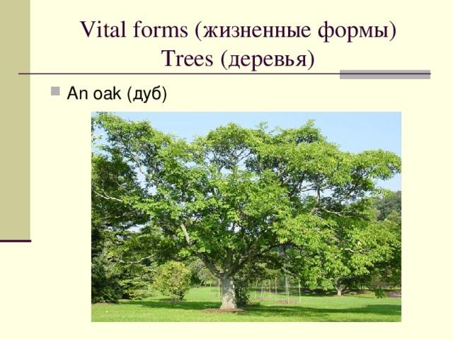 Vital forms ( жизненные формы)  Trees ( деревья )