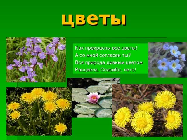 цветы Как прекрасны все цветы! А со мной согласен ты? Вся природа дивным цветом Расцвела. Спасибо, лето!