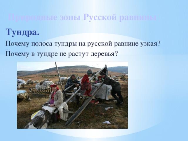 Природные зоны Русской равнины Тундра. Почему полоса тундры на русской равнине узкая? Почему в тундре не растут деревья?