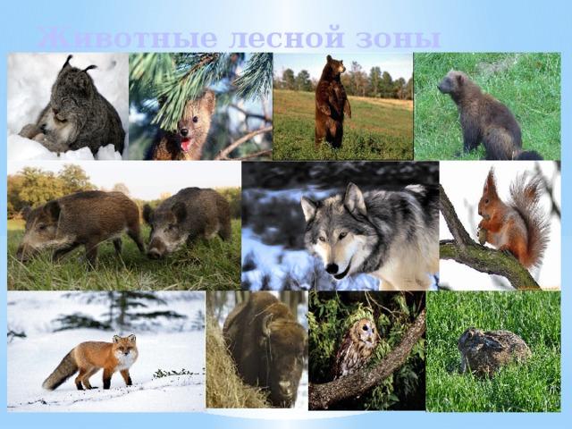 Животные лесной зоны