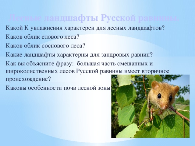 Лесные ландшафты Русской равнины.   Какой К увлажнения характерен для лесных ландшафтов? Каков облик елового леса? Каков облик соснового леса? Какие ландшафты характерны для зандровых равнин? Как вы объясните фразу: большая часть смешанных и широколиственных лесов Русской равнины имеет вторичное происхождение? Каковы особенности почв лесной зоны?