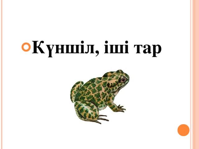 Күншіл, іші тар