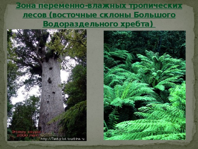 Зона переменно-влажных тропических лесов (восточные склоны Большого Водораздельного хребта)