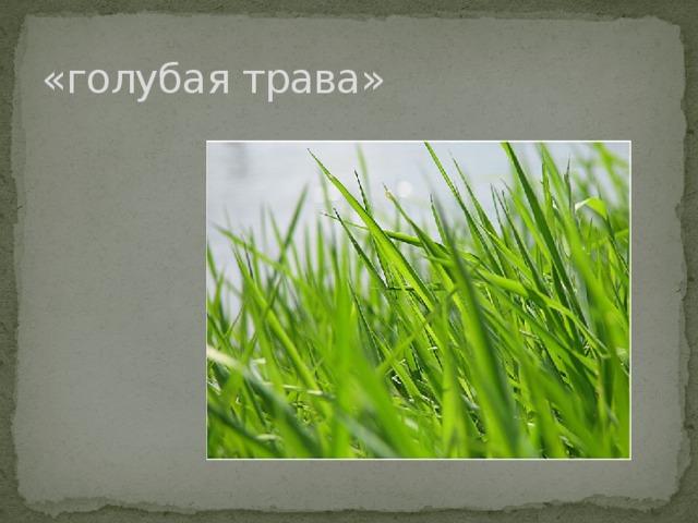 «голубая трава»