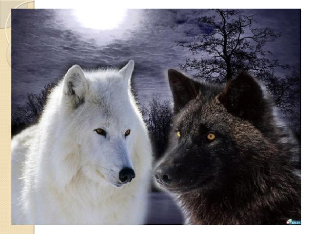 Когда – то давно старый индеец открыл своему внуку одну жизненную истину.  - В каждом человеке идет борьба, похожая на борьбу двух волков. Один волк представляет зло - зависть, ревность, сожаление, эгоизм,  амбиции, ложь… .  Другой волк представляет добро – любовь,  мир, надежду, истину, доброту, верность.  Маленький индеец, тронутый до глубины души словами деда, на несколько мгновений задумался, а потом спросил:  - А какой волк в конце побеждает?  Старый индеец едва заметно улыбнулся и ответил:  - Всегда побеждает тот волк, которого ты кормишь.
