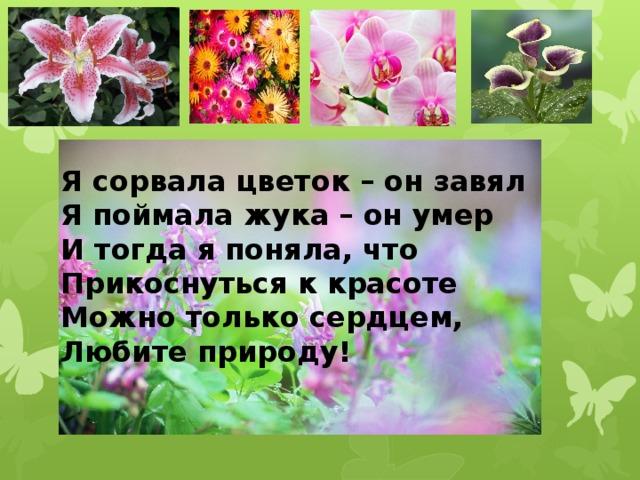 Я сорвала цветок – он завял Я поймала жука – он умер И тогда я поняла, что Прикоснуться к красоте Можно только сердцем, Любите природу!