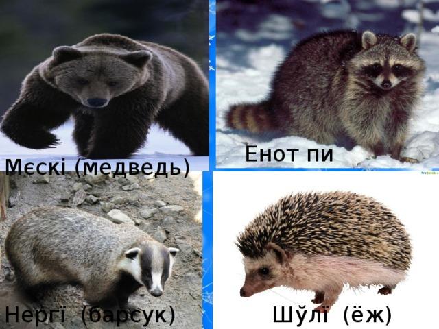 Енот пи (енот) Мєскі (медведь) Нергї  (барсук) Шўлї  (ёж)