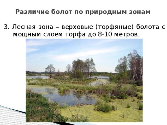Различие болот по природным зонам 3. Лесная зона – верховые (торфяные) болота с мощным слоем торфа до 8-10 метров.