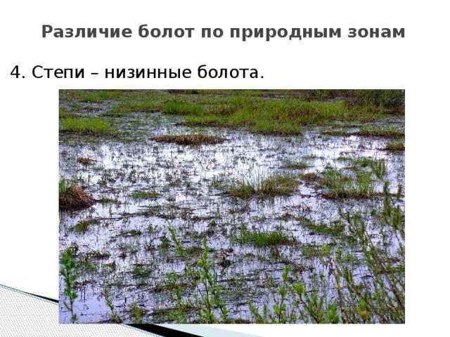 Различие болот по природным зонам 4. Степи – низинные болота.