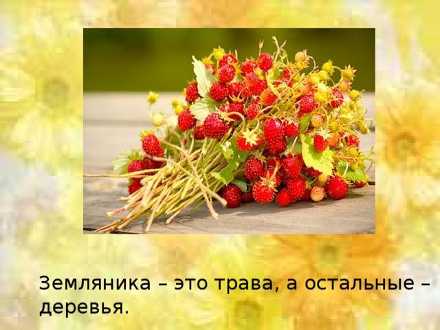 Земляника – это трава, а остальные – деревья.