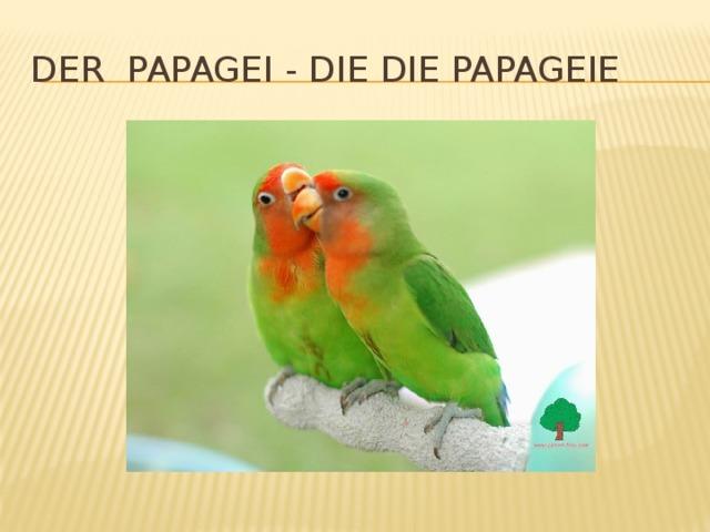 Der Papagei - die die Papageie