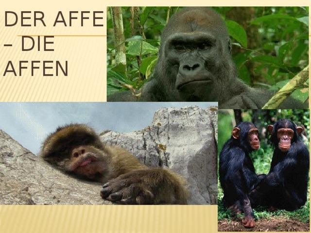 Der Affe – die Affen