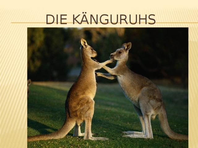 Die känguruhs