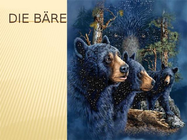 Die Bären
