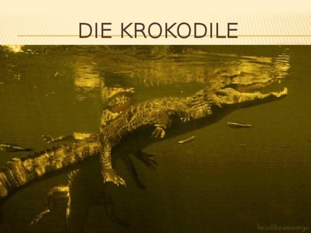 Die krokodile