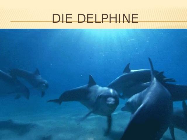 Die delphine