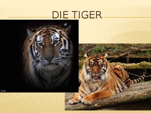 Die Tiger