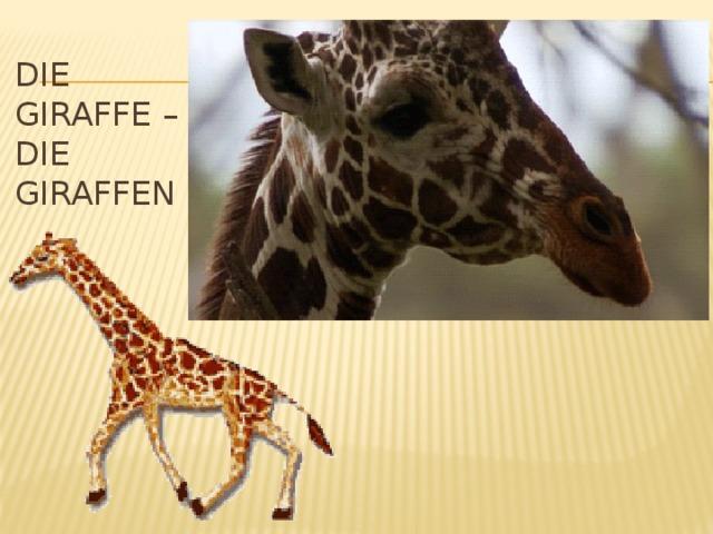 Die Giraffe – die giraffen