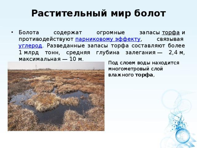 Растительный мир болот   Болота содержат огромные запасы торфа и противодействуют парниковому эффекту , связывая углерод . Разведанные запасы торфа составляют более 1млрд тонн, средняя глубина залегания— 2,4м, максимальная— 10м. Под слоем воды находится многометровый слой влажного торфа ,
