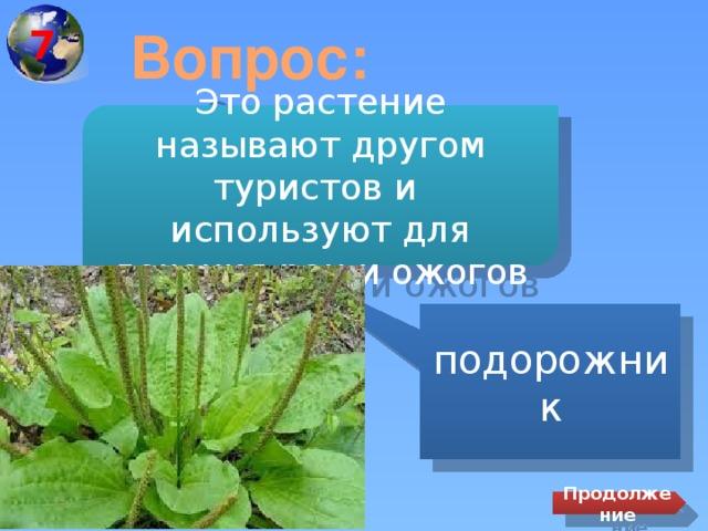 7 Вопрос: Это растение называют другом туристов и используют для лечения ран и ожогов подорожник Продолжение