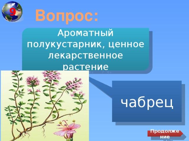 9 Вопрос: Ароматный полукустарник, ценное лекарственное растение чабрец Продолжение