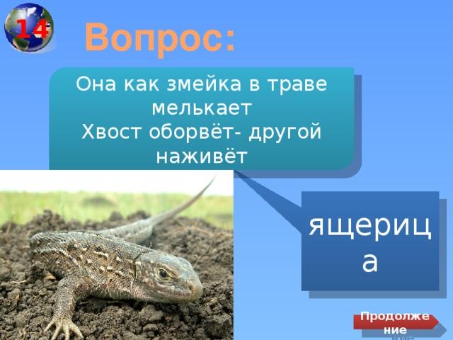 14 Вопрос: Она как змейка в траве мелькает Хвост оборвёт- другой наживёт ящерица Продолжение