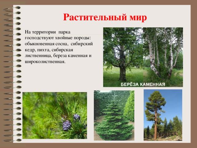 Растительный мир На территории парка господствуют хвойные породы: обыкновенная сосна, сибирский кедр, пихта, сибирская лиственница, береза каменная и широколиственная.