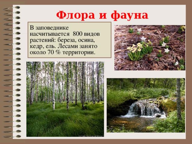 Флора и фауна В заповеднике насчитывается 800 видов растений: береза, осина, кедр, ель. Лесами занято около 70% территории.