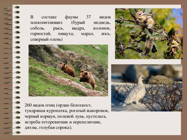 В составе фауны 37 видов млекопитающих (бурый медведь, соболь, рысь, выдра, колонок, горностай, пищуха, марал, лось, северный олень) 260 видов птиц (орлан-белохвост, тундряная куропатка, рогатый жаворонок, черный коршун, полевой лунь, пустельга, ястреба-тетеревятник и перепелятник, дятлы, голубая сорока).