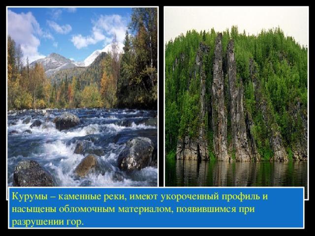 Курумы – каменные реки, имеют укороченный профиль и насыщены обломочным материалом, появившимся при разрушении гор.
