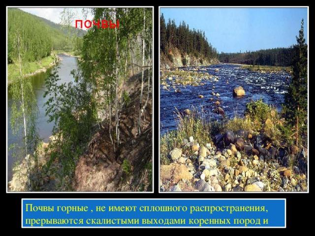 почвы Почвы горные , не имеют сплошного распространения, прерываются скалистыми выходами коренных пород и