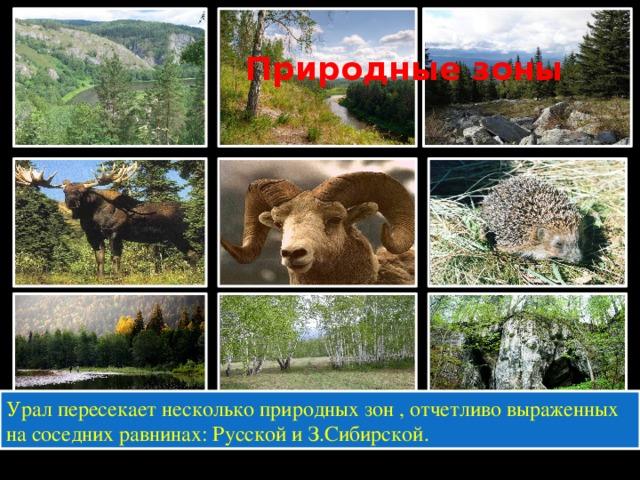 Природные зоны Урал пересекает несколько природных зон , отчетливо выраженных на соседних равнинах: Русской и З.Сибирской.
