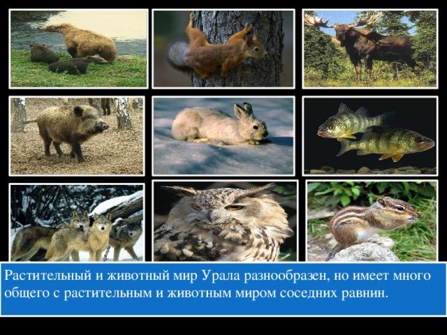 Растительный и животный мир Урала разнообразен, но имеет много общего с растительным и животным миром соседних равнин.