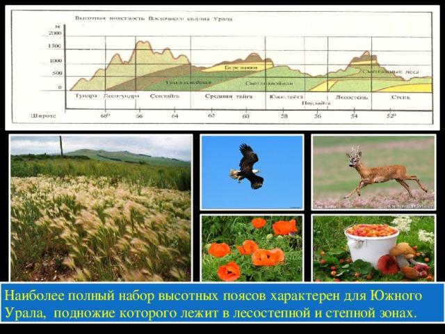Наиболее полный набор высотных поясов характерен для Южного Урала, подножие которого лежит в лесостепной и степной зонах.