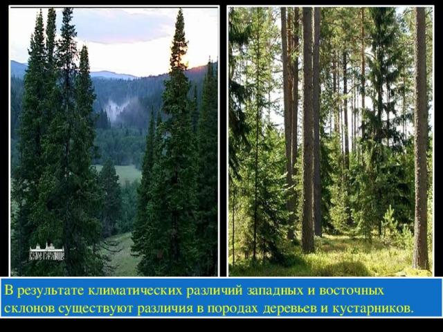В результате климатических различий западных и восточных склонов существуют различия в породах деревьев и кустарников.