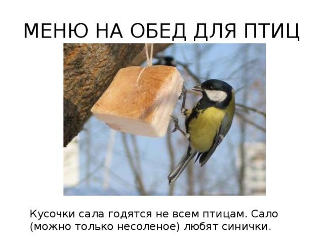 МЕНЮ НА ОБЕД ДЛЯ ПТИЦ Кусочки сала годятся не всем птицам. Сало (можно только несоленое) любят синички.