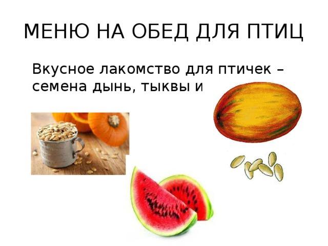 МЕНЮ НА ОБЕД ДЛЯ ПТИЦ Вкусное лакомство для птичек – семена дынь, тыквы и арбуза