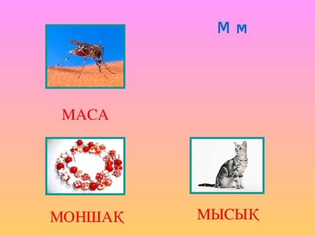 М м МАСА МЫСЫҚ МОНШАҚ