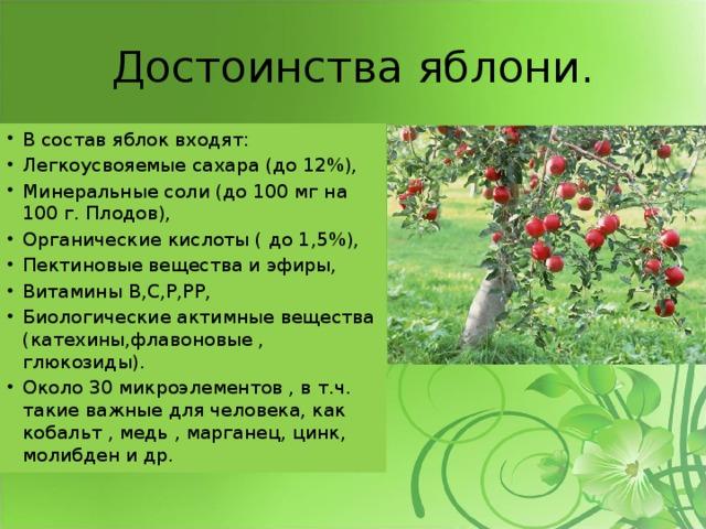 Достоинства яблони.