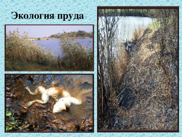 Экология пруда