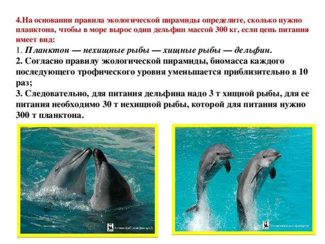 4.На основании правила экологической пирамиды определите, сколько нужно планктона, чтобы в море вырос один дельфин массой 300 кг, если цепь питания имеет вид:  1. Планктон — нехищные рыбы — хищные рыбы — дельфин.  2.Согласно правилу экологической пирамиды, биомасса каждого последующего трофического уровня уменьшается приблизительно в 10 раз;  3.Следовательно, для питания дельфина надо 3 т хищной рыбы, для ее питания необходимо 30 т нехищной рыбы, которой для питания нужно 300 т планктона.