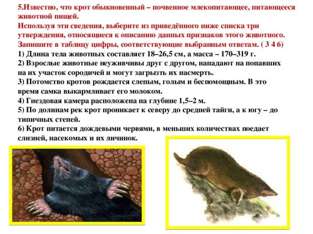 5.Известно, что крот обыкновенный – почвенное млекопитающее, питающееся животной пищей. Используя эти сведения, выберите из приведённого ниже списка три утверждения, относящиеся к описанию данных признаков этого животного. Запишите в таблицу цифры, соответствующие выбранным ответам. ( 3 4 6) 1) Длина тела животных составляет 18–26,5 см, а масса – 170–319 г. 2) Взрослые животные неуживчивы друг с другом, нападают на попавших на их участок сородичей и могут загрызть их насмерть. 3) Потомство кротов рождается слепым, голым и беспомощным. В это время самка выкармливает его молоком. 4) Гнездовая камера расположена на глубине 1,5–2 м. 5) По долинам рек крот проникает к северу до средней тайги, а к югу – до типичных степей. 6) Крот питается дождевыми червями, в меньших количествах поедает слизней, насекомых и их личинок.