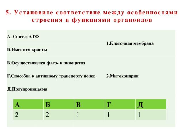 5. Установите соответствие между особенностями строения и функциями органоидов А. Синтез АТФ Б.Имеются кристы В.Осуществляется фаго- и пиноцитоз 1.Клеточная мембрана Г.Способна к активному транспорту ионов Д.Полупроницаема 2.Митохондрии А 2 Б В 2 Г 1 Д 1 1