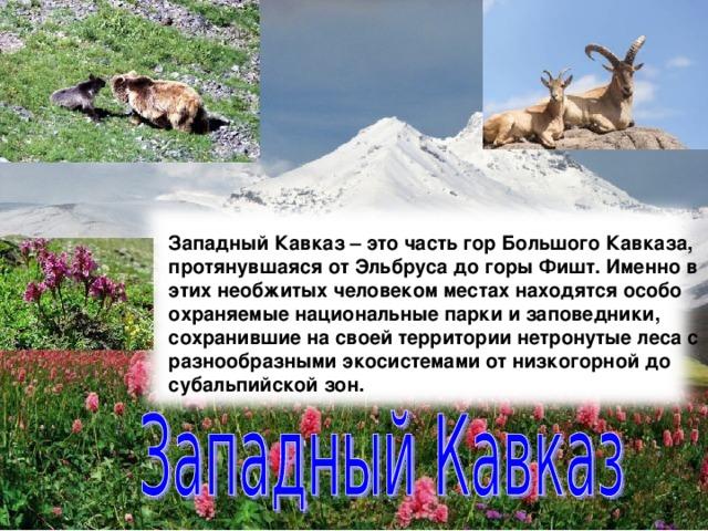 Западный Кавказ – это часть гор Большого Кавказа, протянувшаяся от Эльбруса до горы Фишт. Именно в этих необжитых человеком местах находятся особо охраняемые национальные парки и заповедники, сохранившие на своей территории нетронутые леса с разнообразными экосистемами от низкогорной до субальпийской зон.