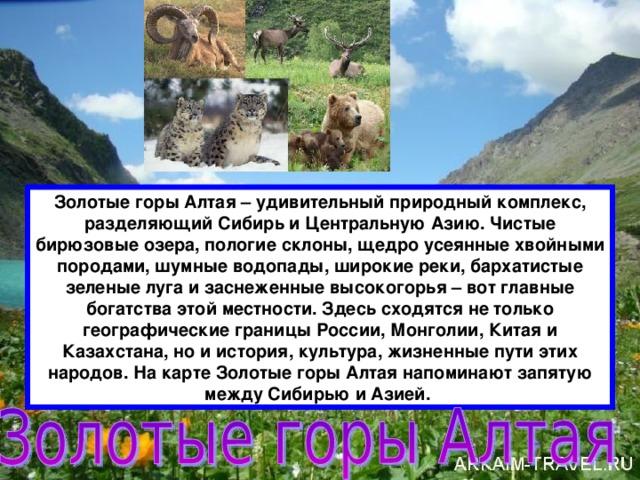 Золотые горы Алтая – удивительный природный комплекс, разделяющий Сибирь и Центральную Азию. Чистые бирюзовые озера, пологие склоны, щедро усеянные хвойными породами, шумные водопады, широкие реки, бархатистые зеленые луга и заснеженные высокогорья – вот главные богатства этой местности.Здесь сходятся не только географические границы России, Монголии, Китая и Казахстана, но и история, культура, жизненные пути этих народов. На карте Золотые горы Алтая напоминают запятую между Сибирью и Азией.